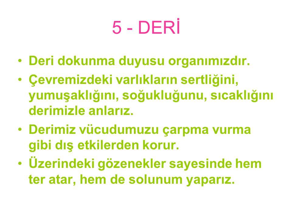 5 - DERİ Deri dokunma duyusu organımızdır.