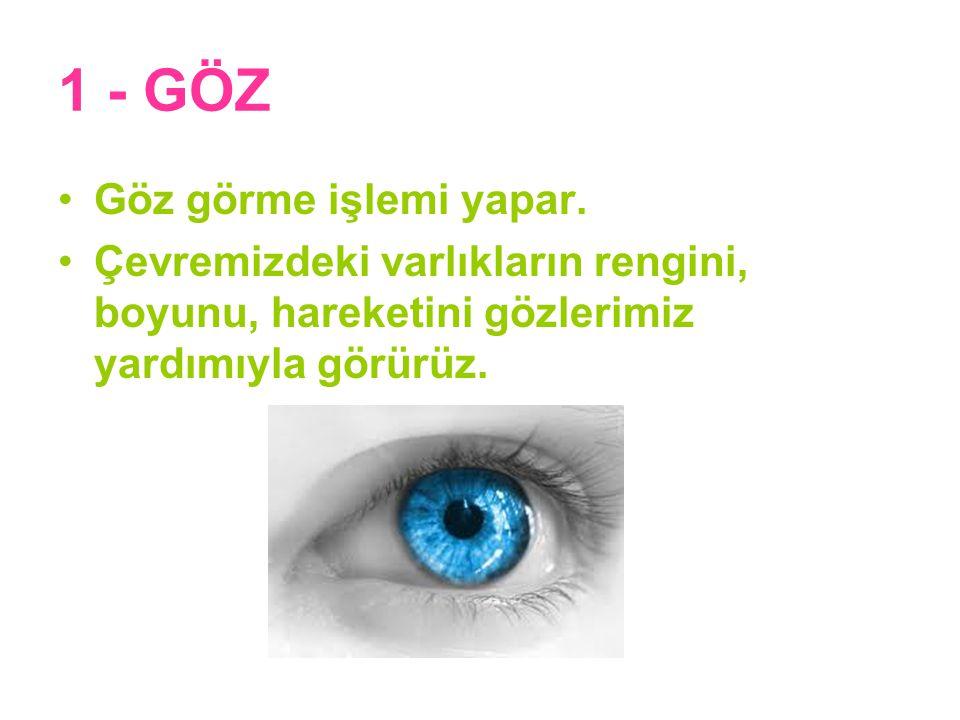 1 - GÖZ Göz görme işlemi yapar.