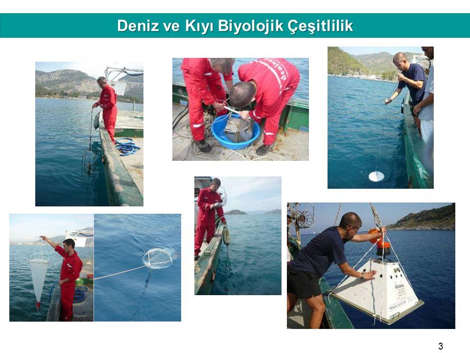 Deniz ve Kıyı Biyolojik Çeşitlilik