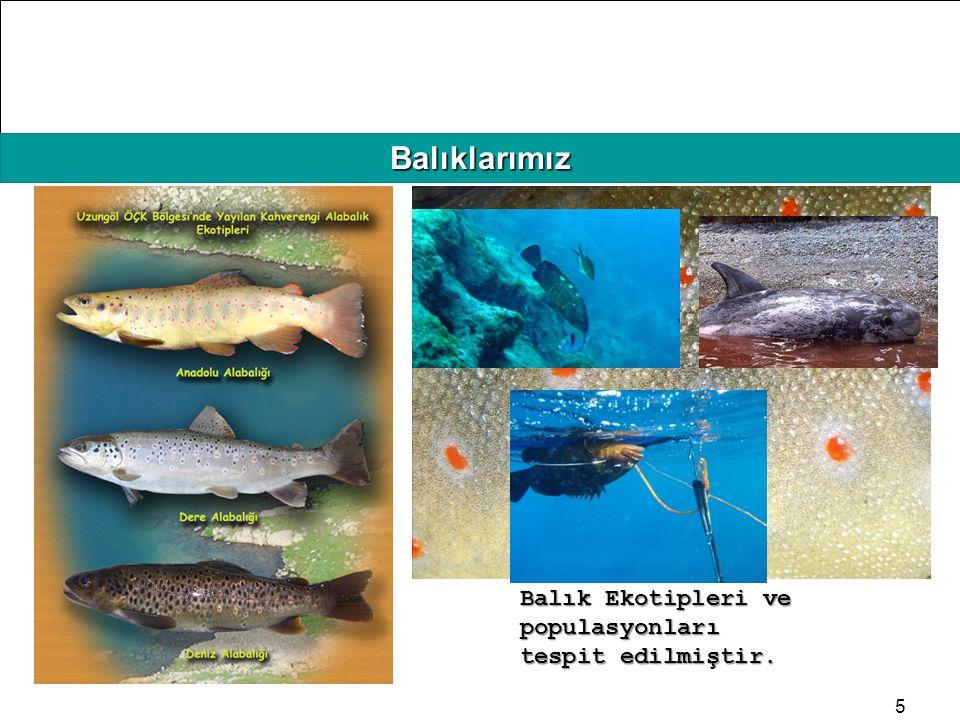 Balıklarımız Balık Ekotipleri ve populasyonları tespit edilmiştir.