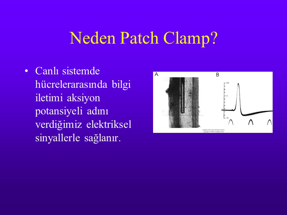 Neden Patch Clamp.