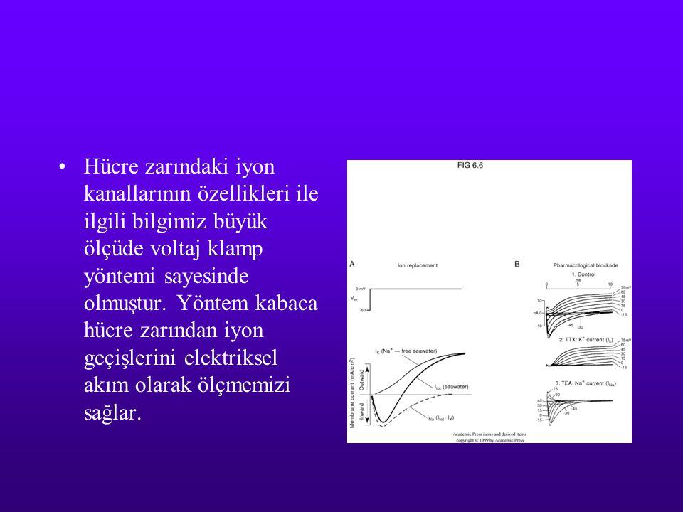 Hücre zarındaki iyon kanallarının özellikleri ile ilgili bilgimiz büyük ölçüde voltaj klamp yöntemi sayesinde olmuştur.