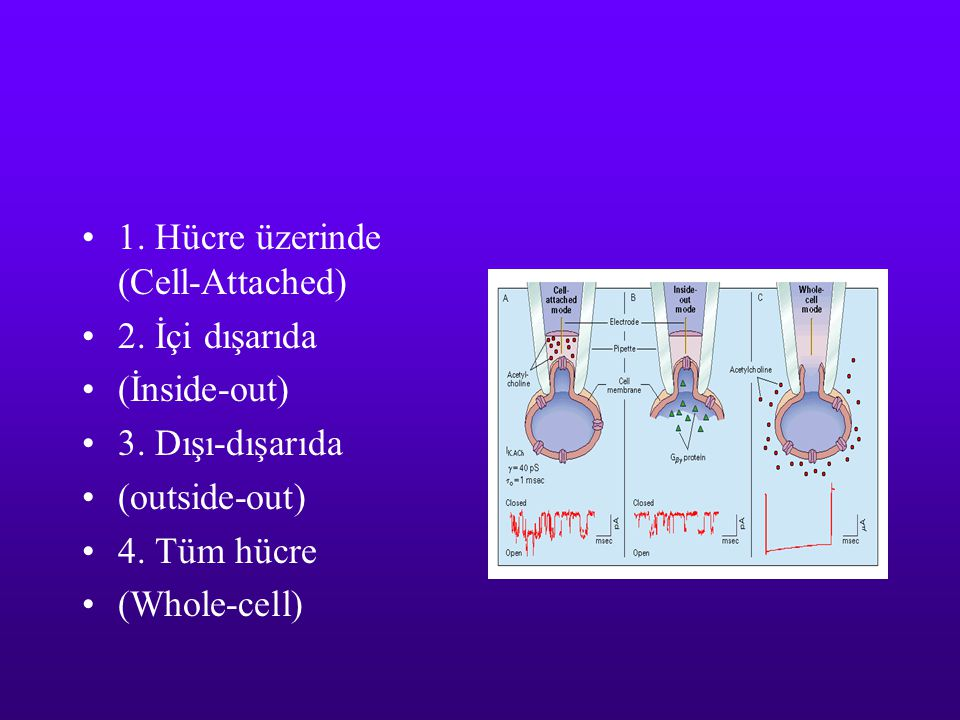 1. Hücre üzerinde (Cell-Attached)