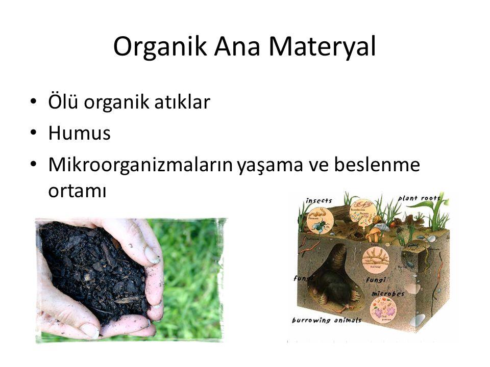 Organik Ana Materyal Ölü organik atıklar Humus