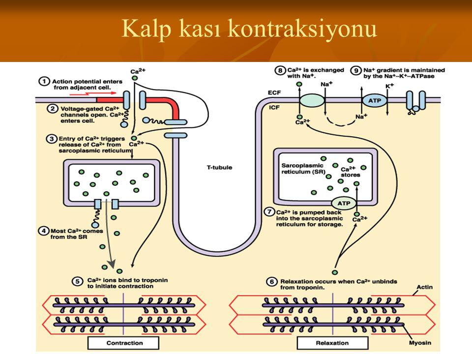 Kalp kası kontraksiyonu