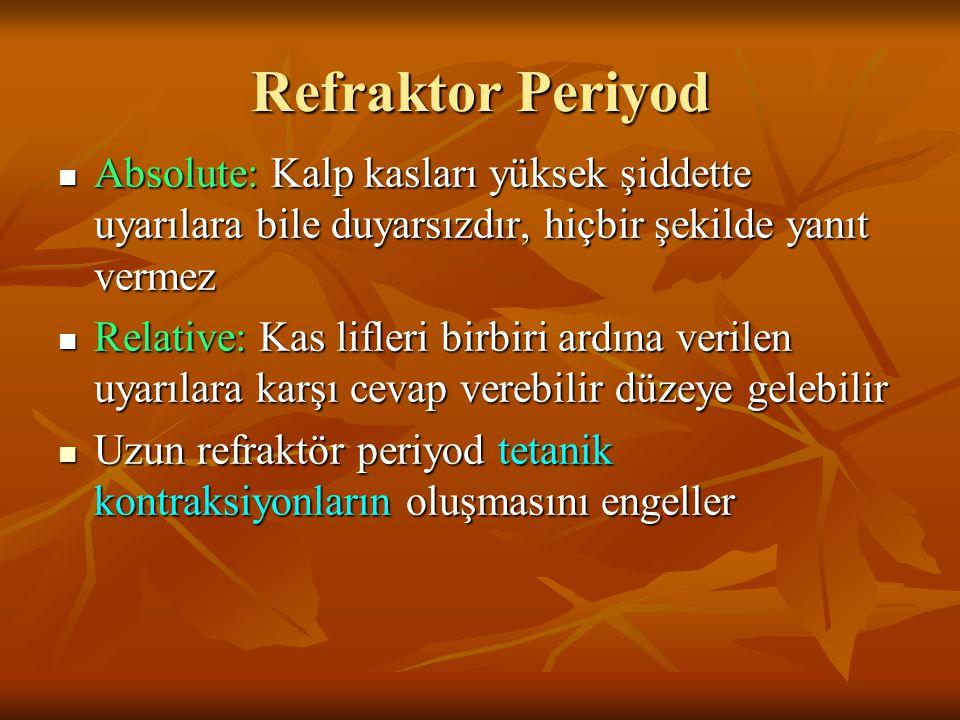 Refraktor Periyod Absolute: Kalp kasları yüksek şiddette uyarılara bile duyarsızdır, hiçbir şekilde yanıt vermez.