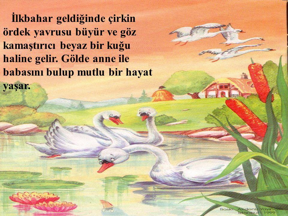 İlkbahar geldiğinde çirkin ördek yavrusu büyür ve göz kamaştırıcı beyaz bir kuğu haline gelir.