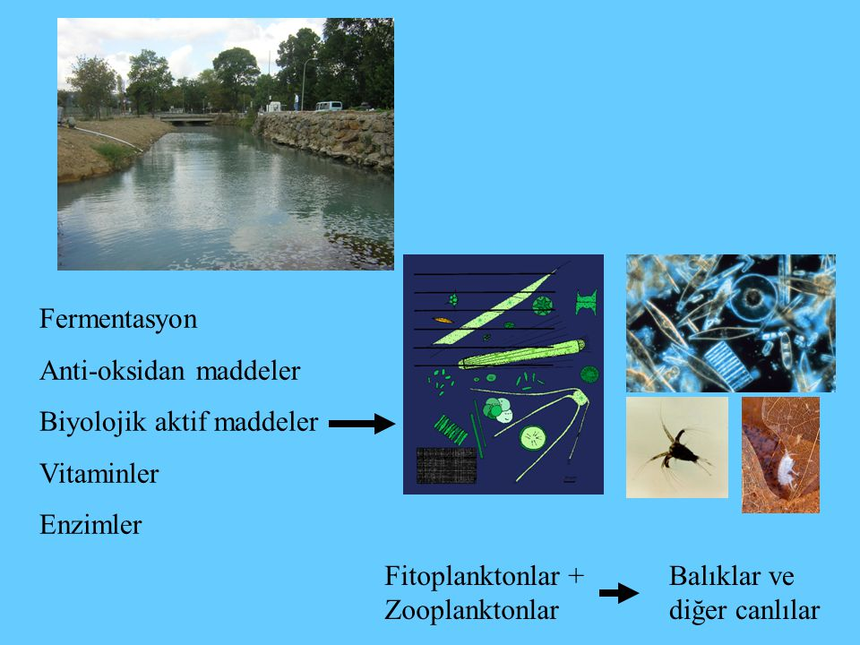 Fermentasyon Anti-oksidan maddeler. Biyolojik aktif maddeler. Vitaminler. Enzimler. Fitoplanktonlar + Zooplanktonlar.