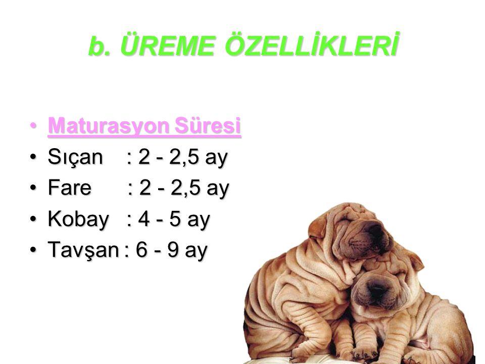 b. ÜREME ÖZELLİKLERİ Maturasyon Süresi Sıçan : 2 - 2,5 ay