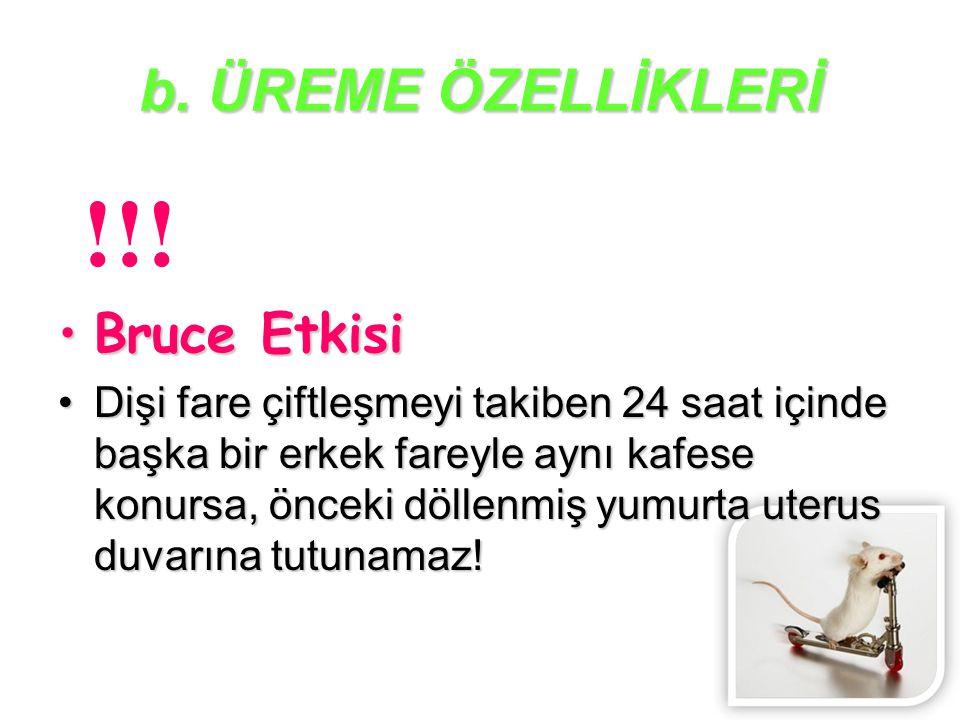 !!! b. ÜREME ÖZELLİKLERİ Bruce Etkisi