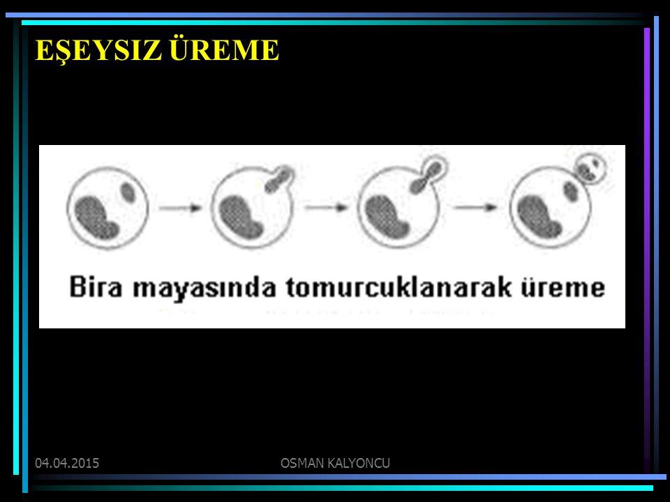 EŞEYSIZ ÜREME 09.04.2017 OSMAN KALYONCU