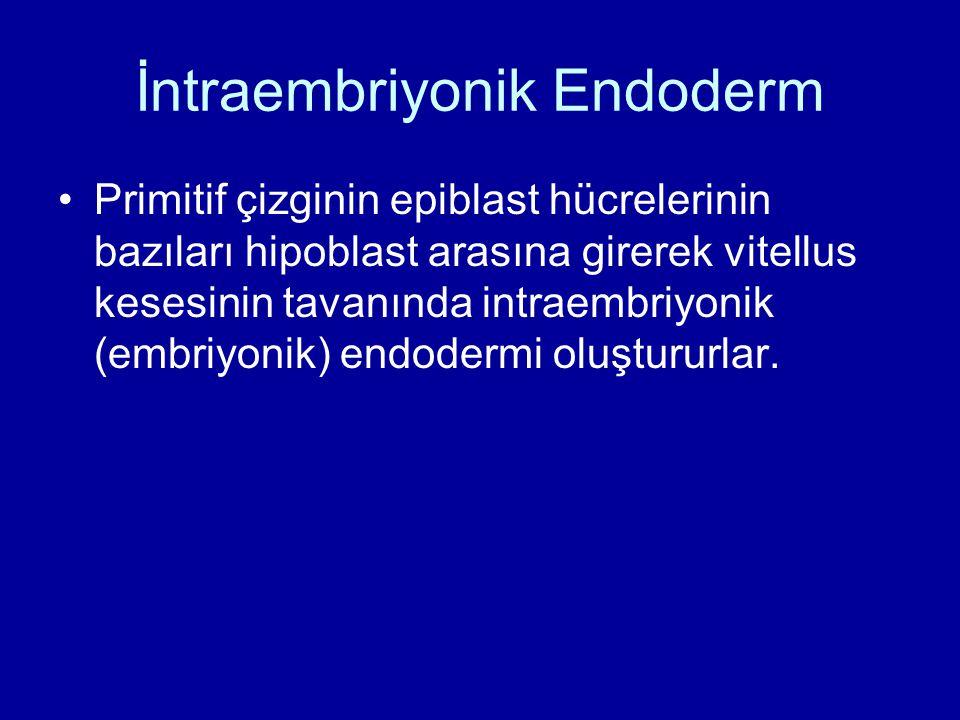İntraembriyonik Endoderm