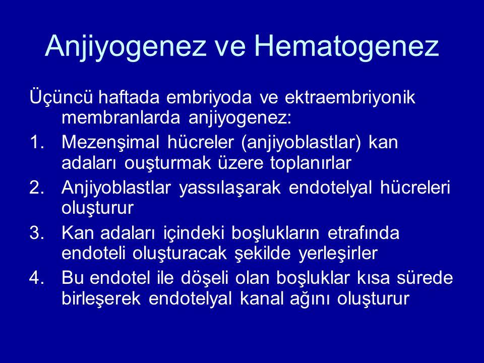 Anjiyogenez ve Hematogenez