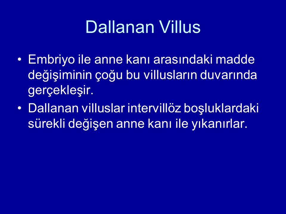 Dallanan Villus Embriyo ile anne kanı arasındaki madde değişiminin çoğu bu villusların duvarında gerçekleşir.