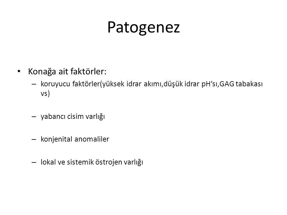 Patogenez Konağa ait faktörler: