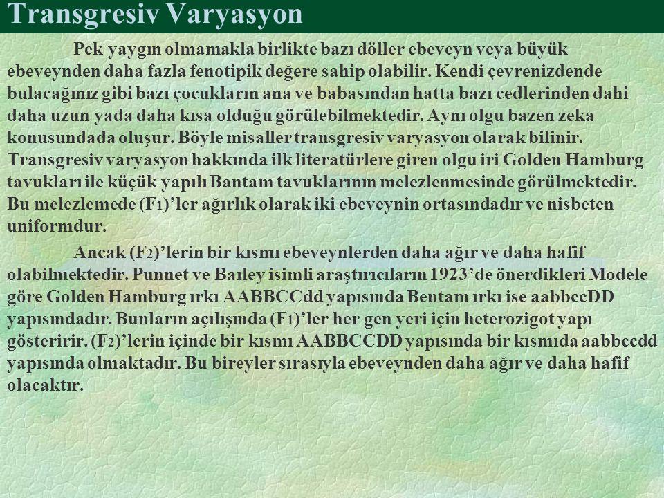Transgresiv Varyasyon