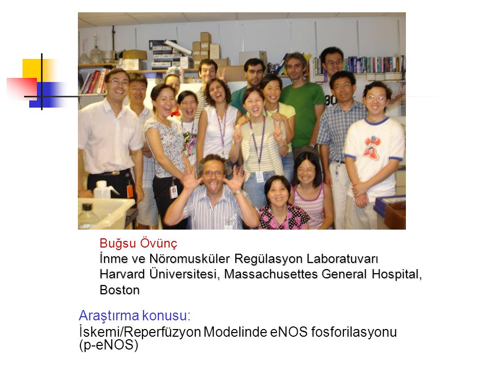İskemi/Reperfüzyon Modelinde eNOS fosforilasyonu (p-eNOS)