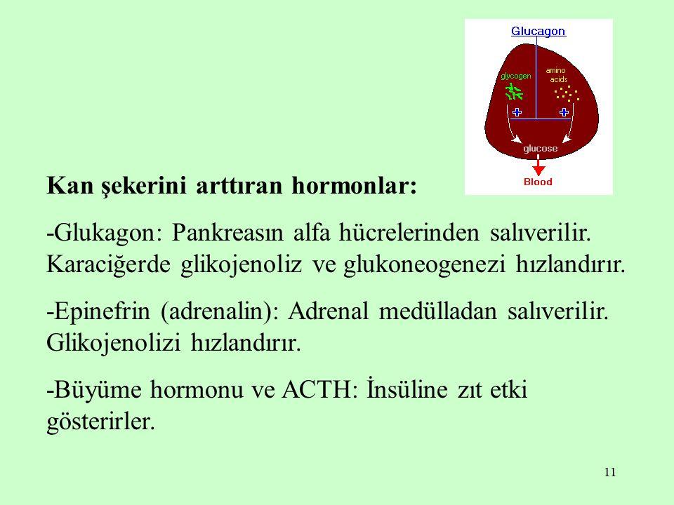 Kan şekerini arttıran hormonlar: