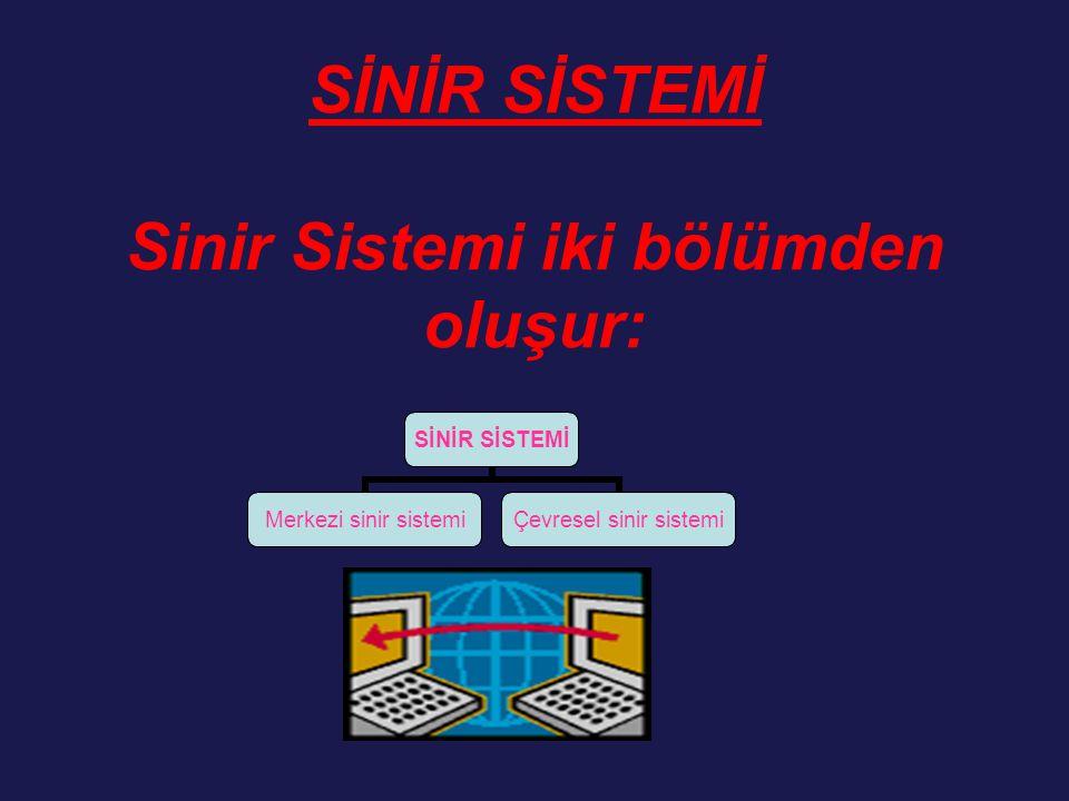 SİNİR SİSTEMİ Sinir Sistemi iki bölümden oluşur: