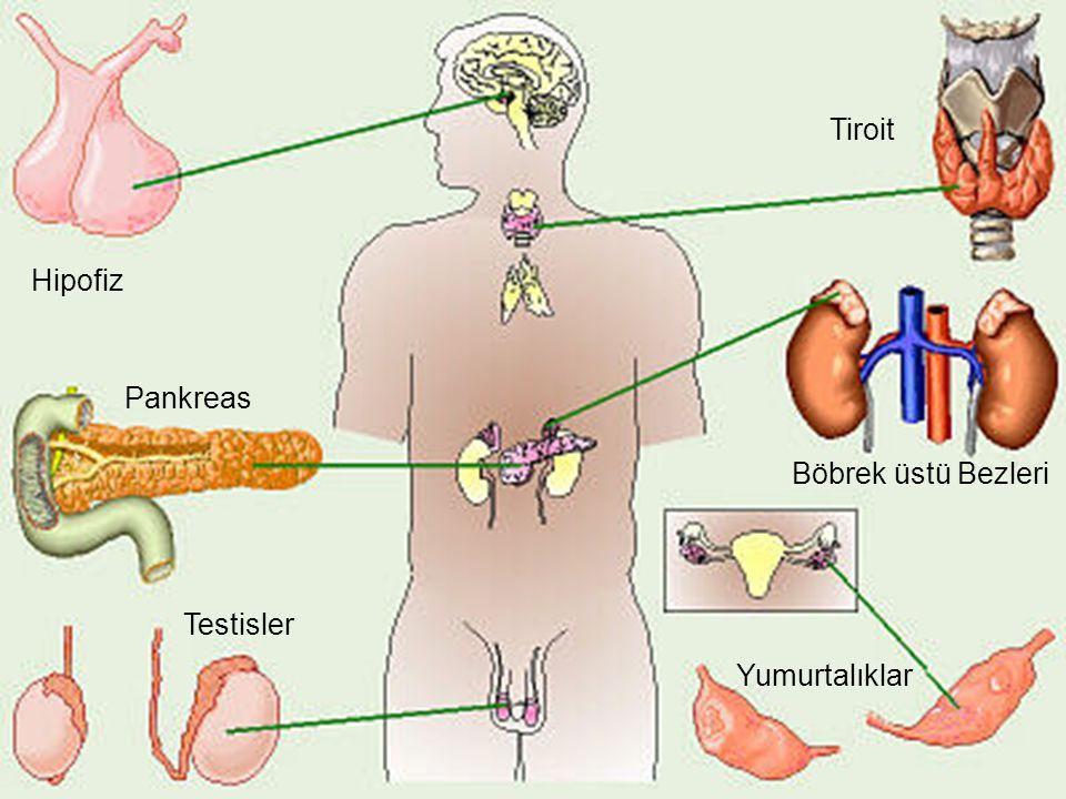 Tiroit Hipofiz Pankreas Böbrek üstü Bezleri Testisler Yumurtalıklar