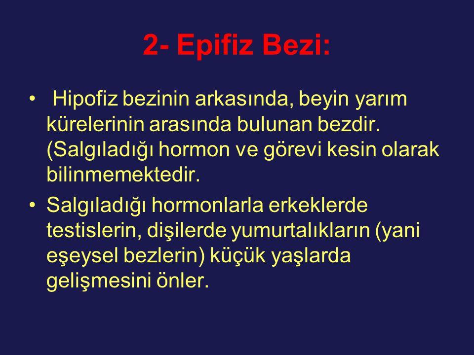 2- Epifiz Bezi: