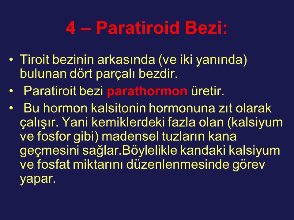 4 – Paratiroid Bezi: Tiroit bezinin arkasında (ve iki yanında) bulunan dört parçalı bezdir. Paratiroit bezi parathormon üretir.