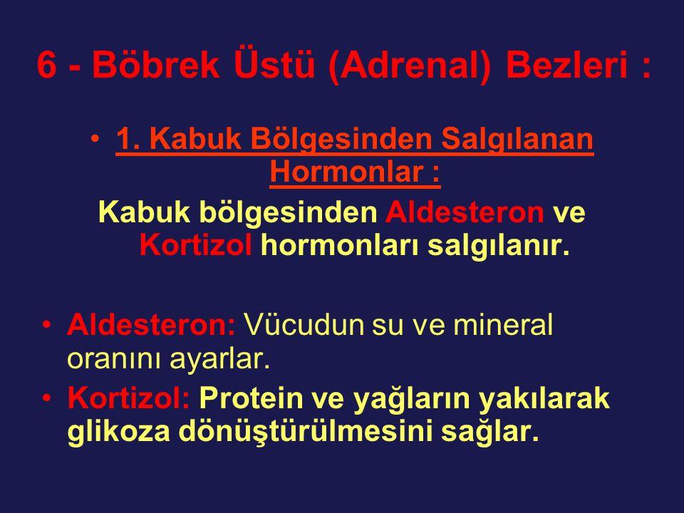 6 - Böbrek Üstü (Adrenal) Bezleri :