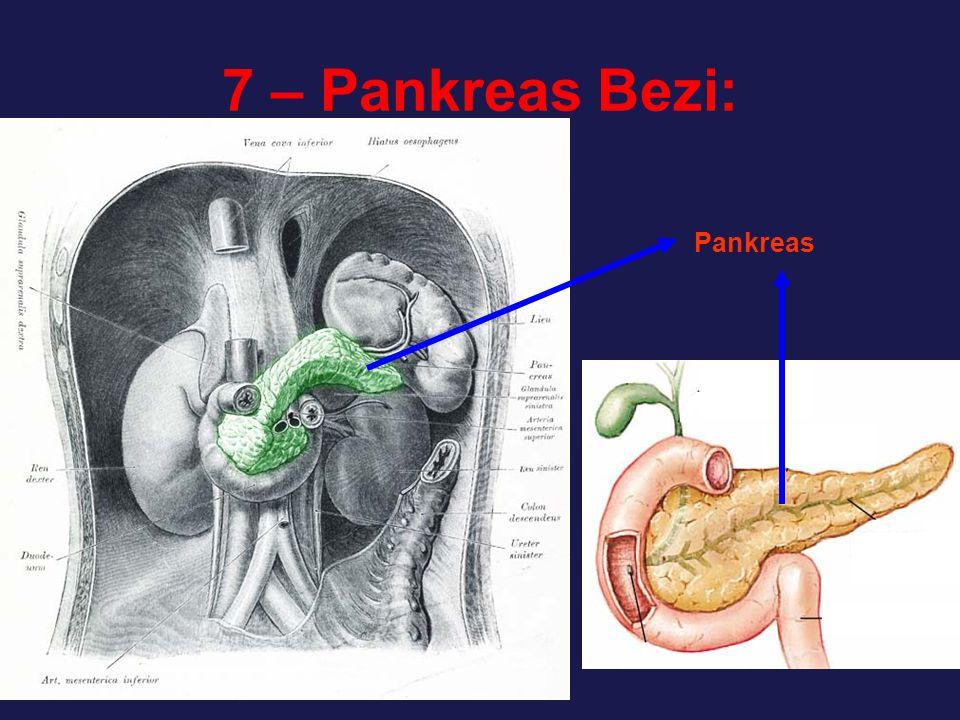 7 – Pankreas Bezi: Pankreas