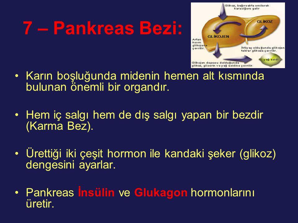 7 – Pankreas Bezi: Karın boşluğunda midenin hemen alt kısmında bulunan önemli bir organdır.