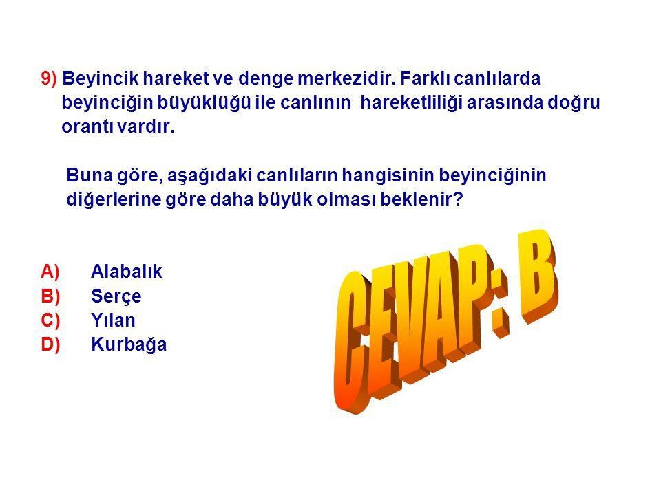 CEVAP: B 9) Beyincik hareket ve denge merkezidir. Farklı canlılarda