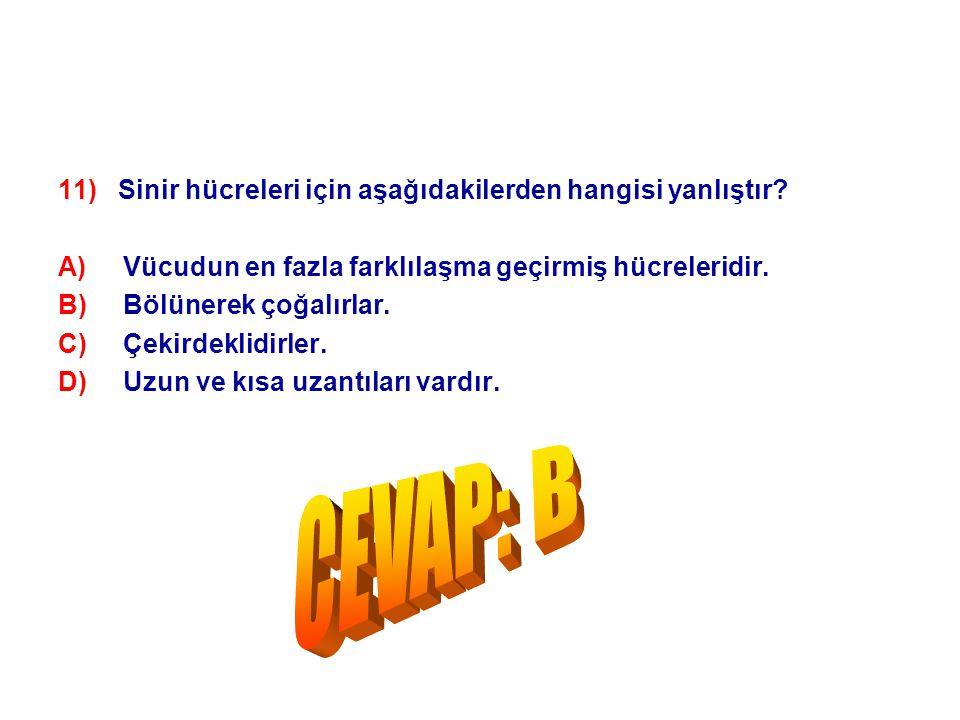 CEVAP: B 11) Sinir hücreleri için aşağıdakilerden hangisi yanlıştır