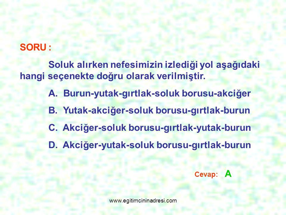 A. Burun-yutak-gırtlak-soluk borusu-akciğer