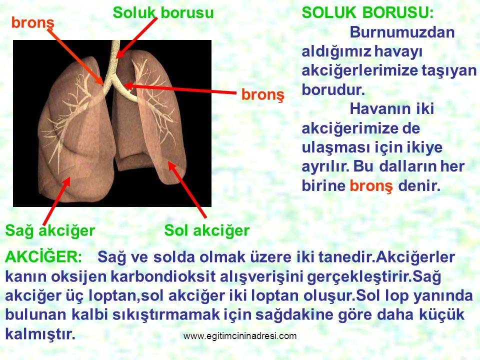 Soluk borusu bronş bronş Sağ akciğer Sol akciğer