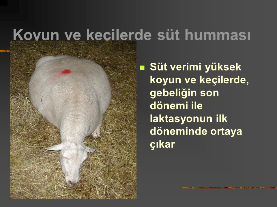 Koyun ve keçilerde süt humması