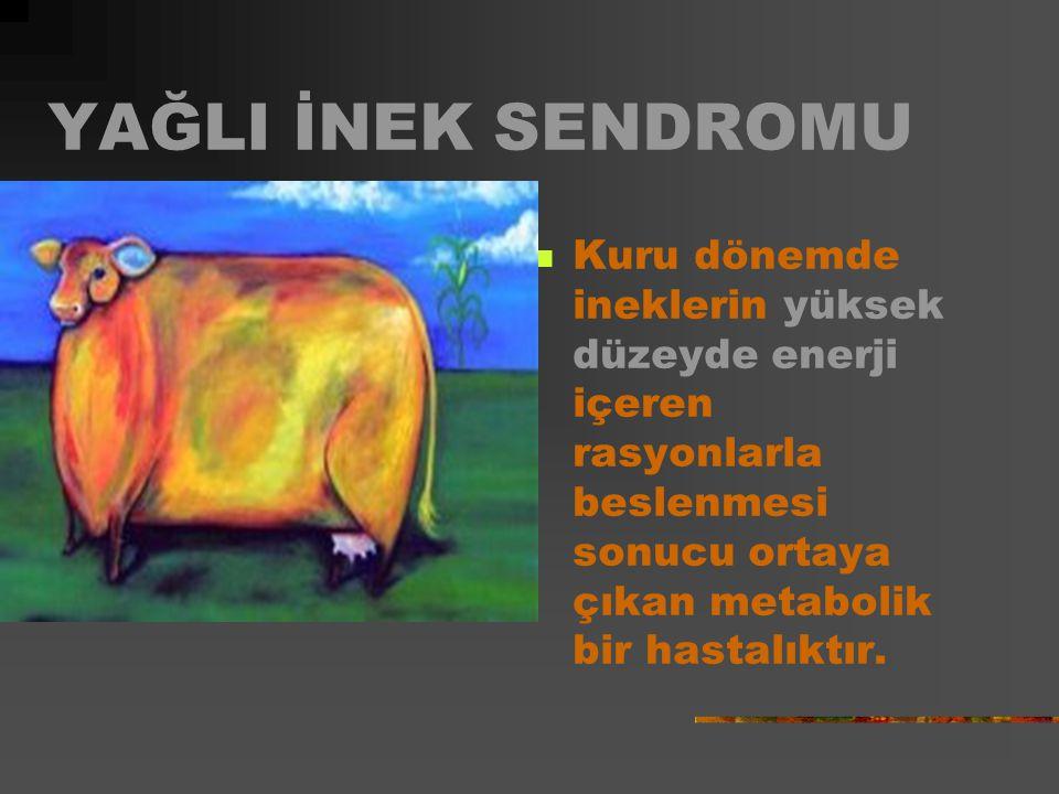 YAĞLI İNEK SENDROMU Kuru dönemde ineklerin yüksek düzeyde enerji içeren rasyonlarla beslenmesi sonucu ortaya çıkan metabolik bir hastalıktır.