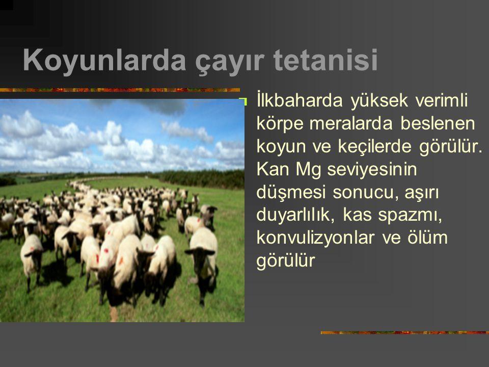 Koyunlarda çayır tetanisi