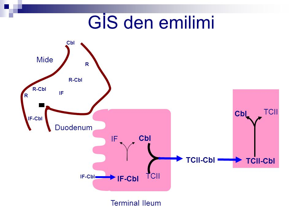 GİS den emilimi Mide Duodenum TCII-Cbl TCII Terminal Ileum Cbl R R-Cbl