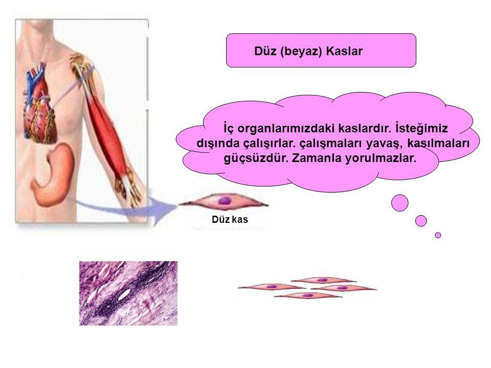 İç organlarımızdaki kaslardır. İsteğimiz