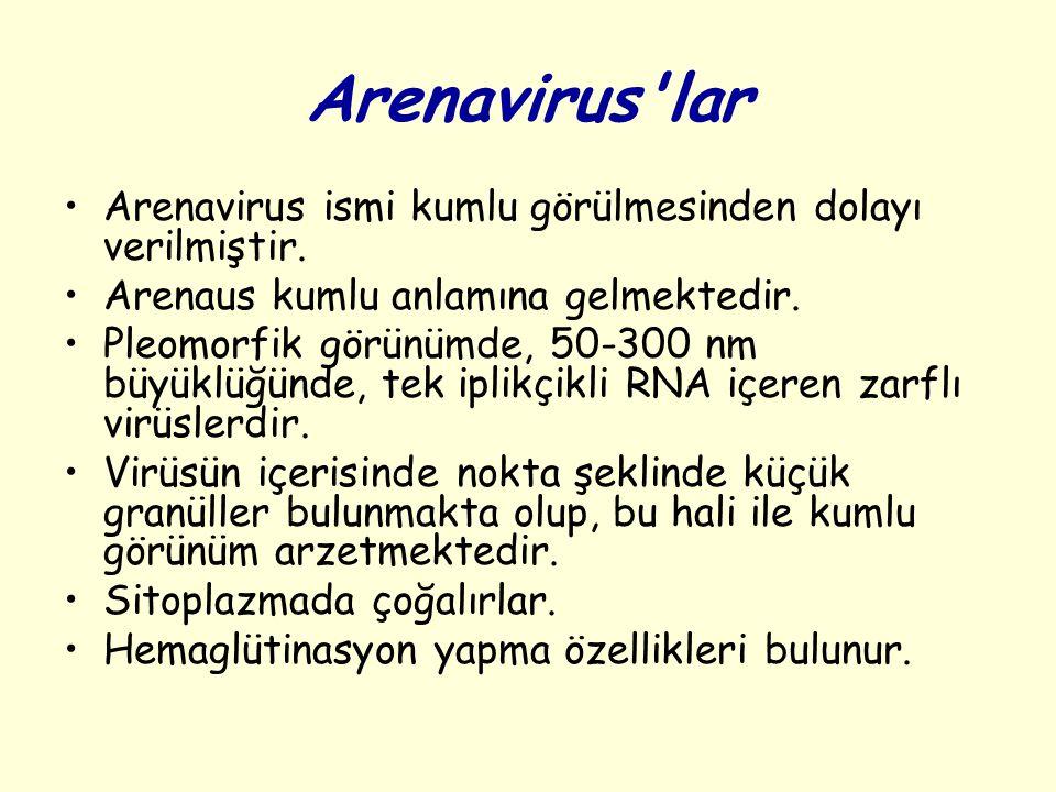Arenavirus lar Arenavirus ismi kumlu görülmesinden dolayı verilmiştir.