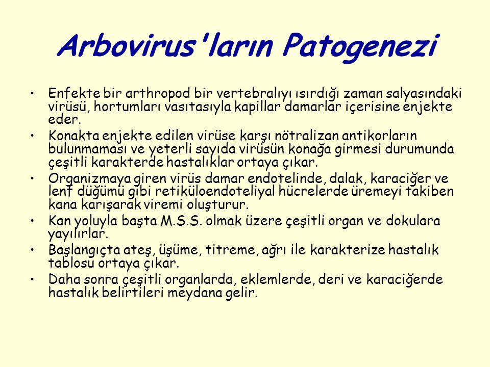 Arbovirus ların Patogenezi