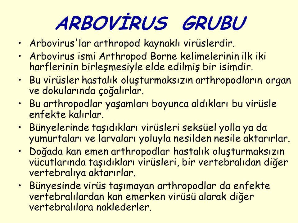 ARBOVİRUS GRUBU Arbovirus lar arthropod kaynaklı virüslerdir.