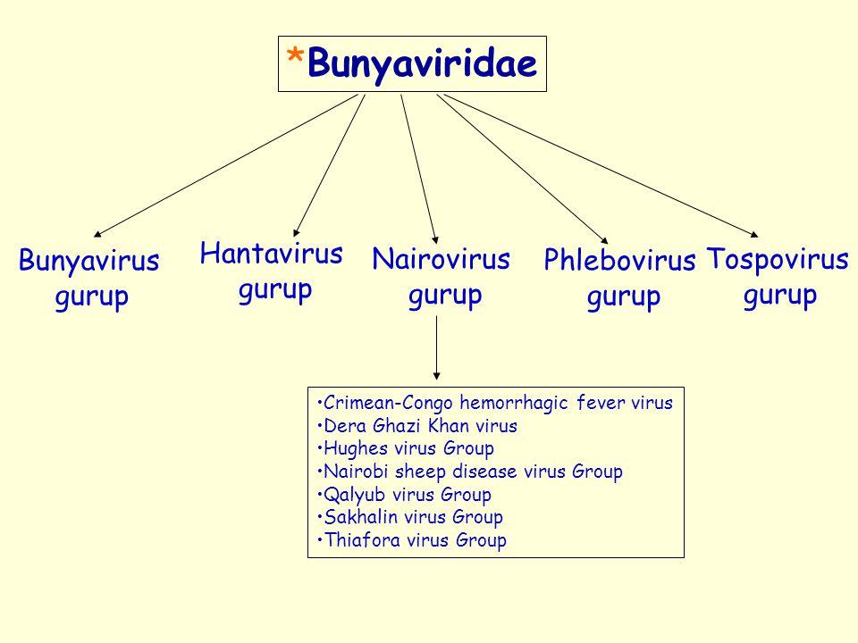 *Bunyaviridae Hantavirus gurup Bunyavirus gurup Nairovirus gurup