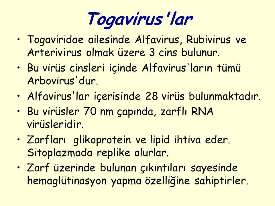 Togavirus lar Togaviridae ailesinde Alfavirus, Rubivirus ve Arterivirus olmak üzere 3 cins bulunur.