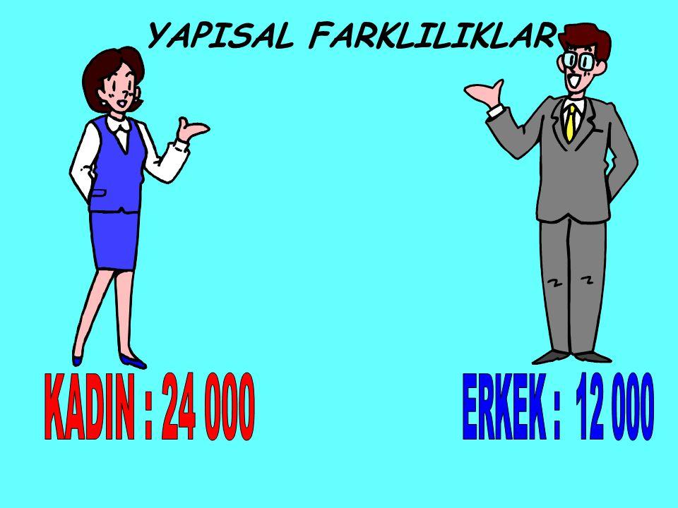 YAPISAL FARKLILIKLAR KADIN : 24 000 ERKEK : 12 000