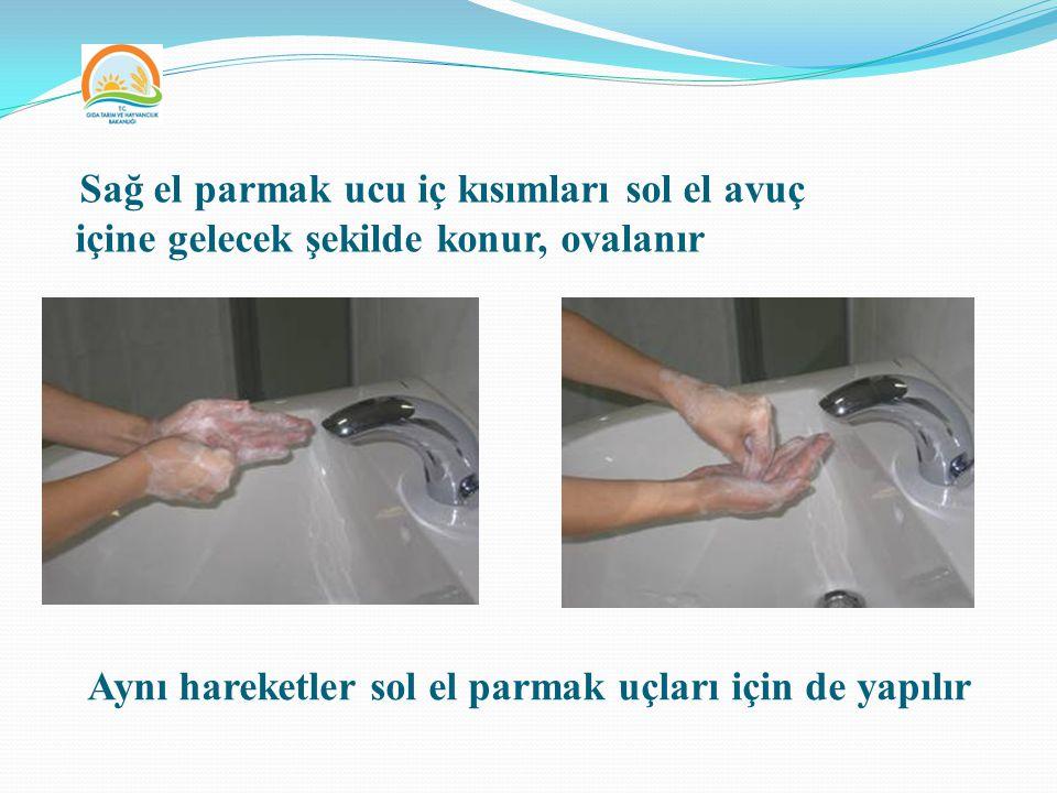 Aynı hareketler sol el parmak uçları için de yapılır