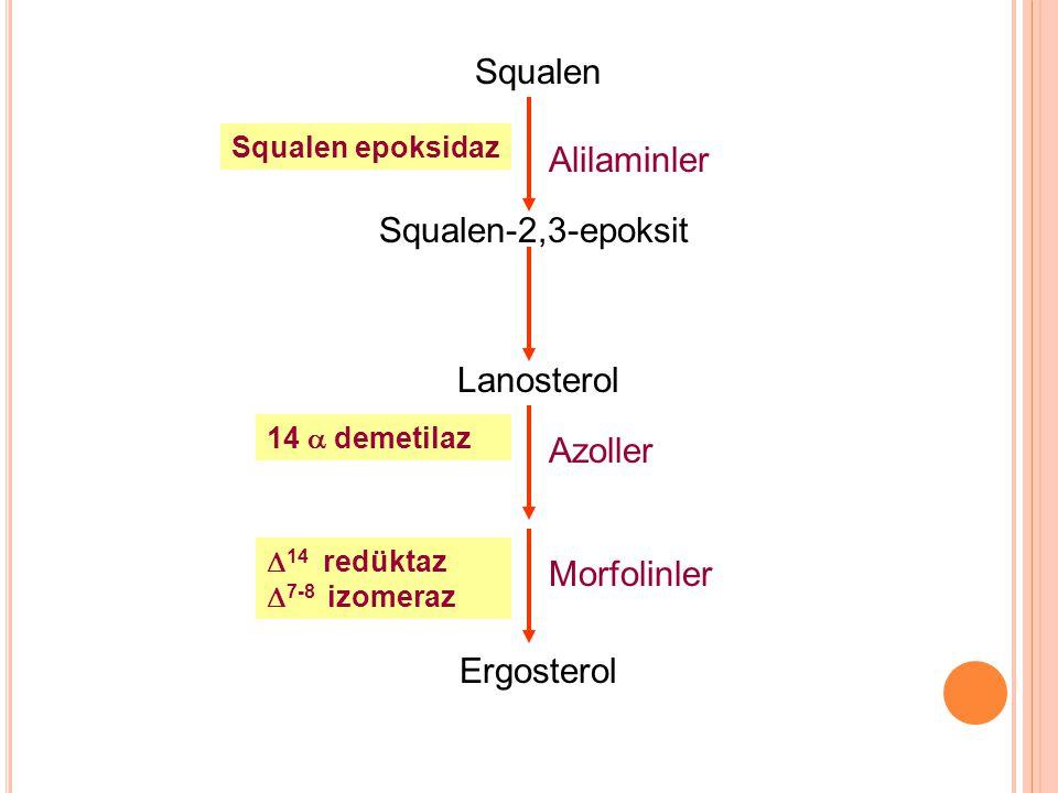 Squalen Alilaminler Squalen-2,3-epoksit Lanosterol Azoller Morfolinler