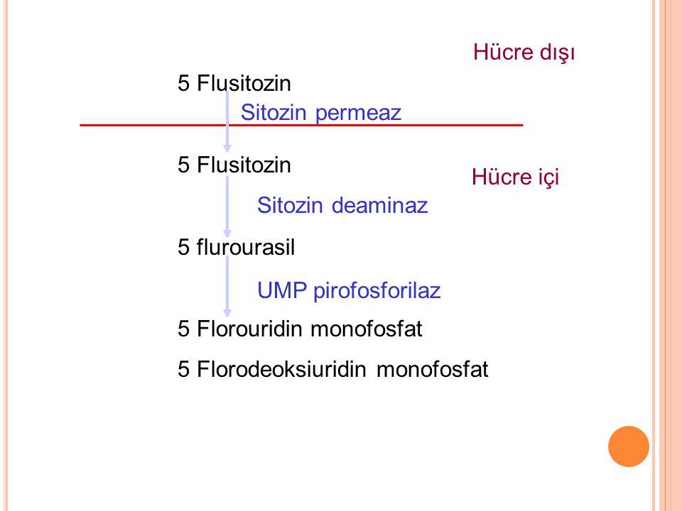 Hücre dışı 5 Flusitozin. 5 flurourasil. 5 Florouridin monofosfat. 5 Florodeoksiuridin monofosfat.
