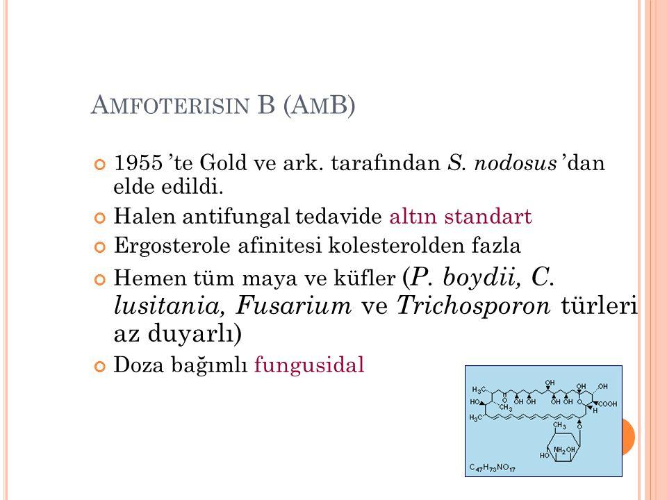 Amfoterisin B (AmB) 1955 'te Gold ve ark. tarafından S. nodosus 'dan elde edildi. Halen antifungal tedavide altın standart.