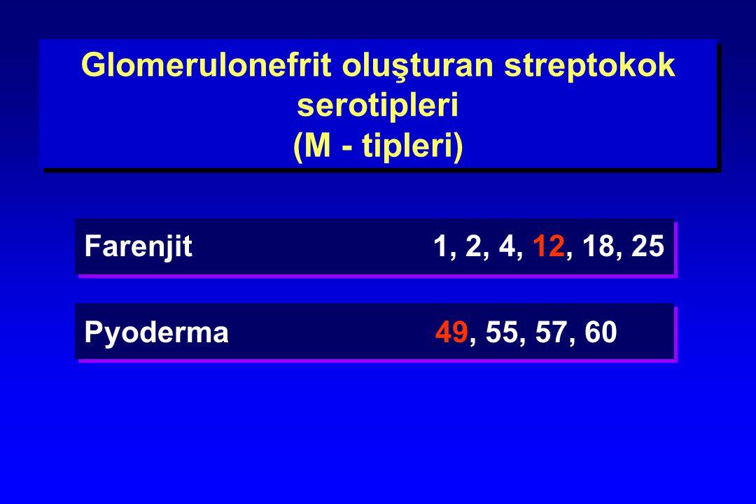 Glomerulonefrit oluşturan streptokok serotipleri (M - tipleri)