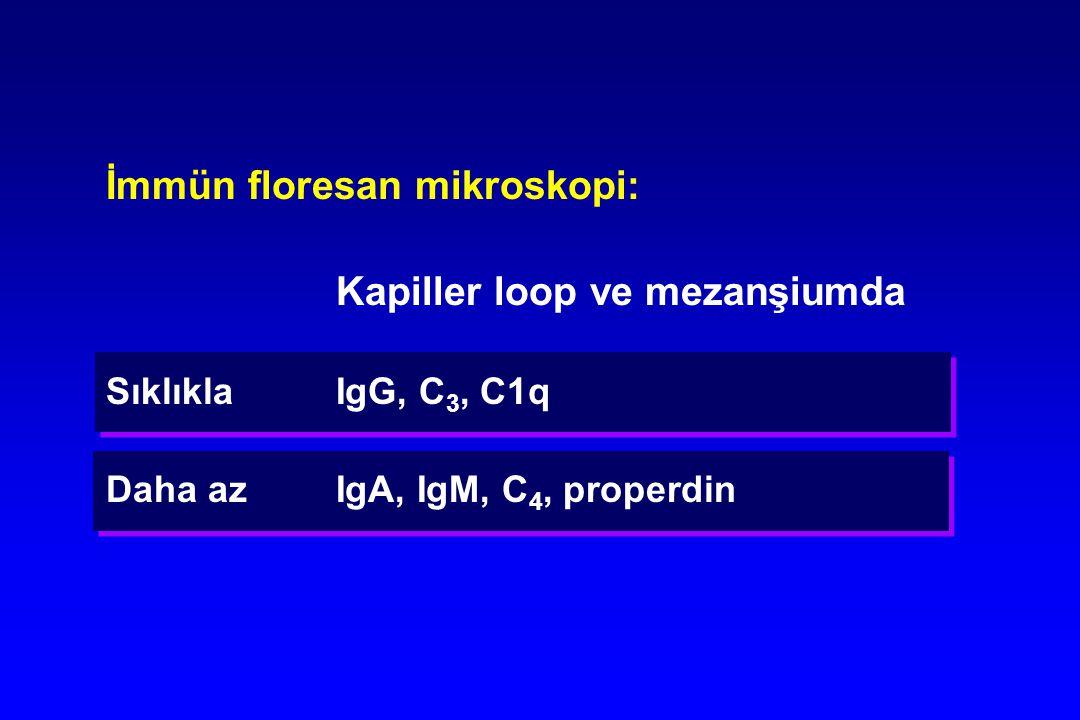 İmmün floresan mikroskopi: Kapiller loop ve mezanşiumda